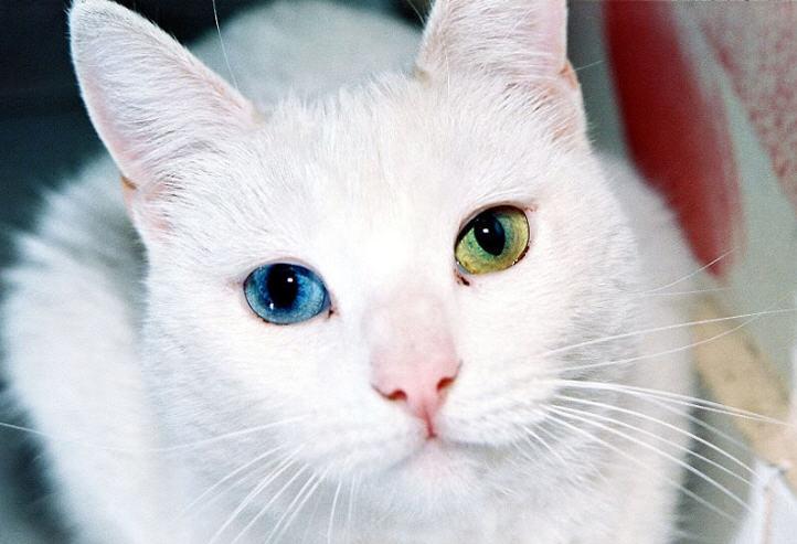Pakcik Chomy ﴾ڤقچئ چوماي﴿ Kucing Binatang Kesayangan Nabi
